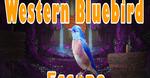 8b Western Bluebird Escape