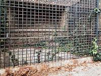 Ancient Abandoned Zoo Escape