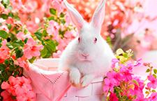 Conejo blanco y flores