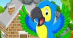 Cute Parrot Rescue